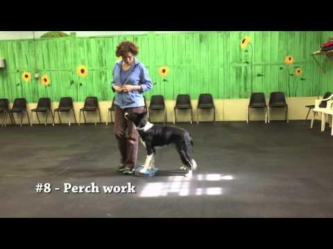 Prim - Intermediate Trick Dog
