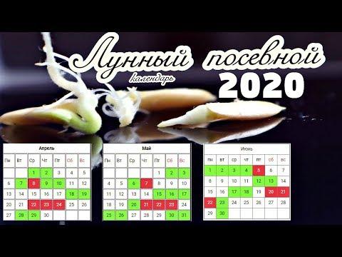 В какие числа сажать огурцы на рассаду по лунному календарю 2020 для мощного урожая зеленцев?