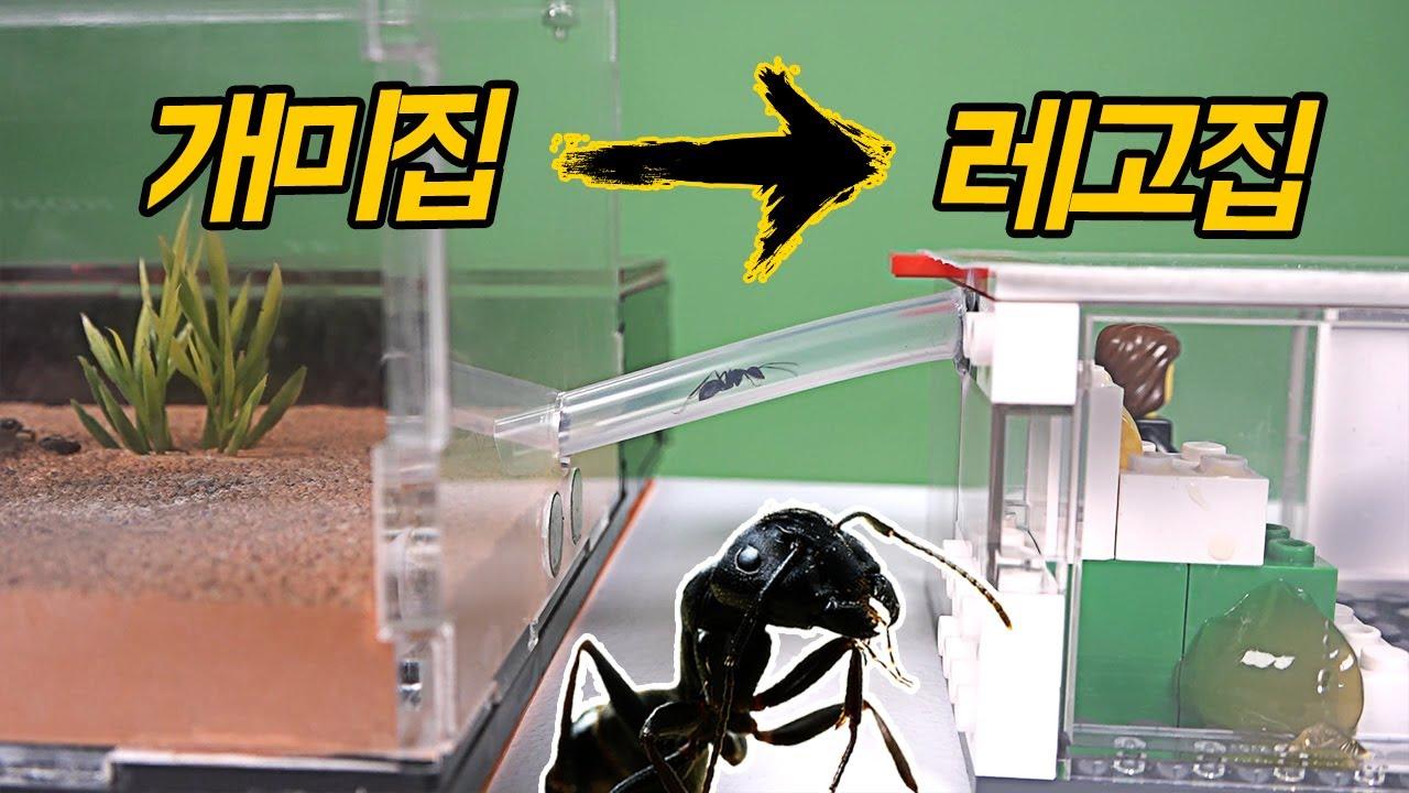 '개미'들은 레고집으로 이사할까?