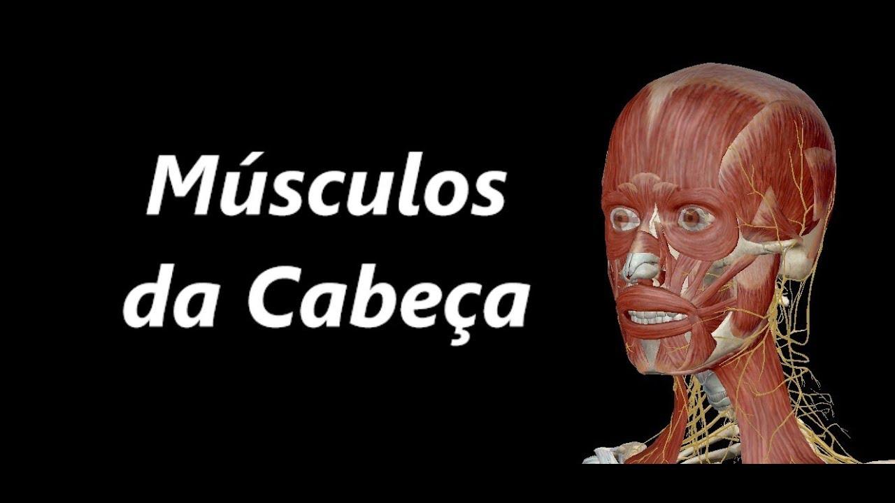 Anatomia dos Músculos da Cabeça em 3D - YouTube