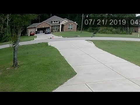 19-year-old saves child from dog attack