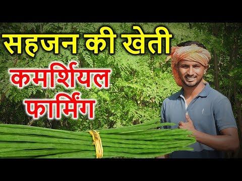 Drumstick-सहजन की फायदेमंद कमर्शियल बिज़नेस खेती🔥🔥Drumstick Farming In India, A To Z खेती