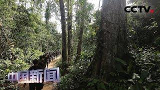 [中国新闻] 秘鲁拟巨额投资保护亚马孙雨林 | CCTV中文国际