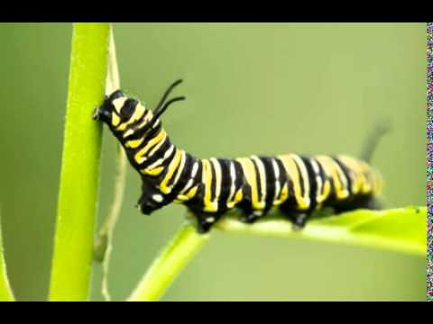 the old branch caterpillar shoes youtube funny animal videos