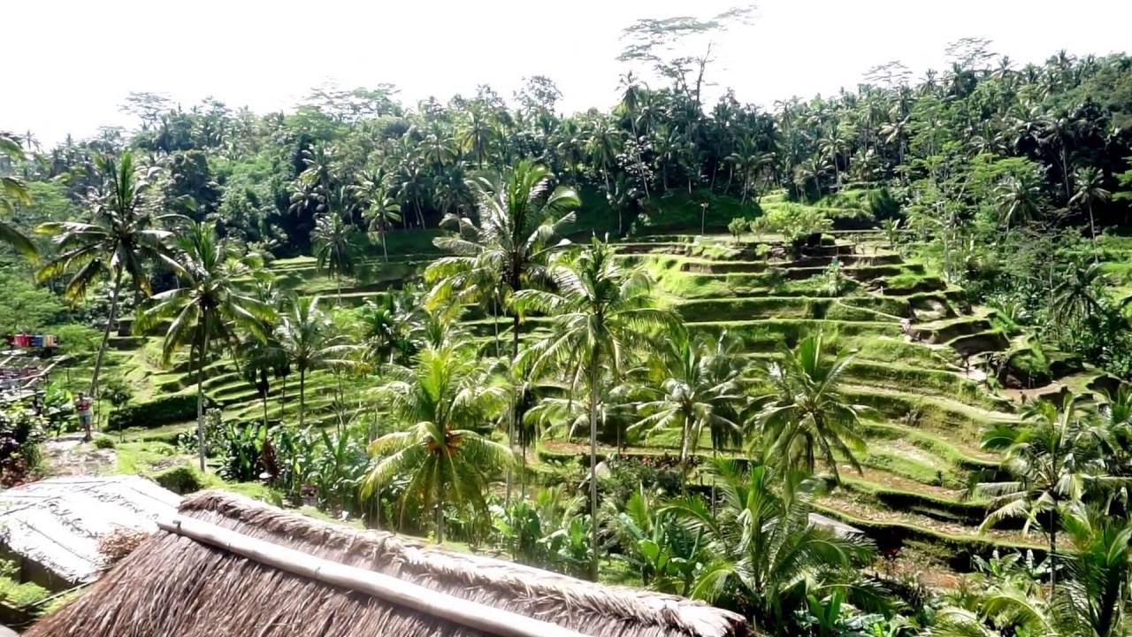 Tegalalang rice terrace in ubud bali youtube for Tegalalang rice terrace ubud