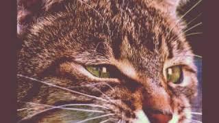 Картинки с котами 3 часть