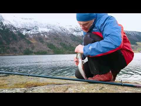 Easy Fishing, Fjord Fishing North Norway