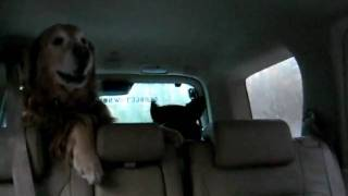 Going for a ride in the car thumbnail