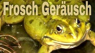 Kaufen froschfalle Wildfallen &