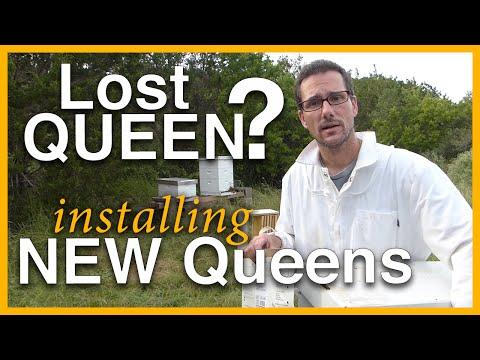 Beginning Beekeeping: Lost Queen? New Queens - GSB S1 E5
