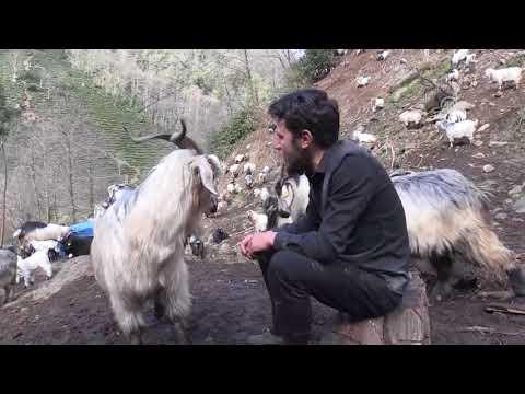 Keçilere Fısıldayan Adam