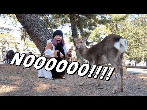 Feeding the Deers at NARA - ALMOST ATE MY CAMERA!!! (FEB. 4, 2018) - saytioco