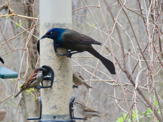 Belle Isle Nature Center | Backyard Bird Quick Tips: All About Bird Feeders