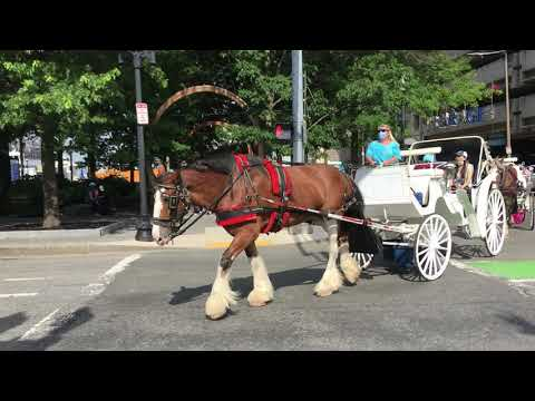 Boston - Horse and Carriage Ride!