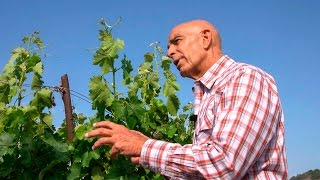 How Billionaire Tom Barrack Became a Bordeaux-Style Winemaker