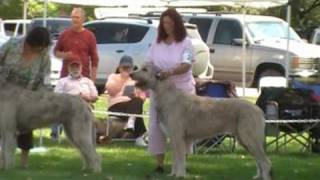 Rocky Mtn Irish Wolfhound Specialty 2009 Steppin