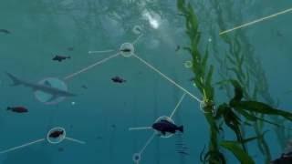 Exploring Ecosystems: Coastal Food Webs | California Academy of Sciences
