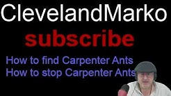 How to find Carpenter Ants: How to stop Carpenter ants, fast and easy Carpenter Ant removal