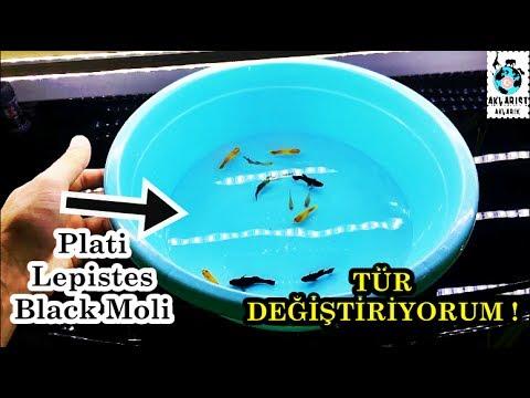 Yeni Balıklar Aldım | Cikleti Bırakıyorum !