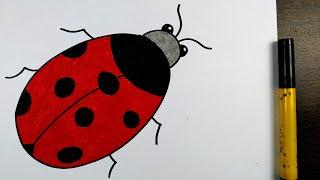 ladybug draw easy step drawing smart