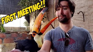 meeting-my-rescue-toucan-for-the-first-time