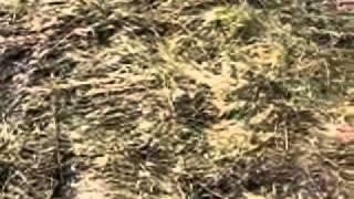 копалки  видео(, 2011-03-03T16:47:17.000Z)