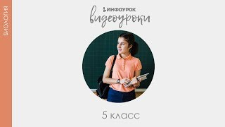 Лишайники | Биология 5 класс #15 | Инфоурок