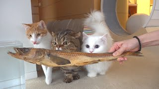 Can I Leave My Cats Alone with Fish? (ENG SUB)