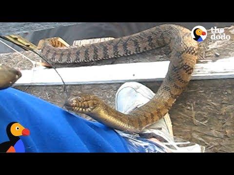 Man Feeds WILD SNAKE Friend A Snack  The Dodo
