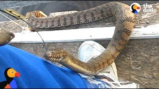 Download Man Feeds WILD SNAKE Friend A Snack | The Dodo