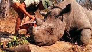 Умер ПОСЛЕДНИЙ самец северного белого носорога