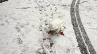 【おマメちゃん】初めての雪に喜ぶ2歳児 thumbnail