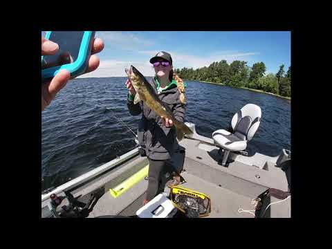 Rigging And Jigging Big Minnows On Lake Kabetogama Late June