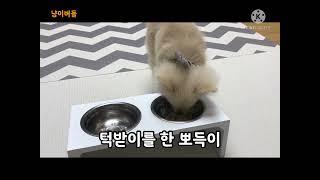 강아지 간식 만들기(심쿵주의!)