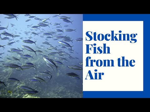 Extreme Fish Stocking: Repopulating Lakes By Air
