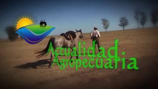 Actualidad Agropecuaria 1 de junio 2018