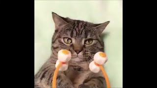 Funny cats #23