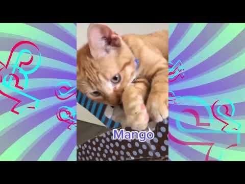 Cats and Dogs funniest TikTok video moments #16