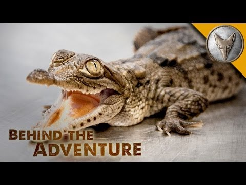 American Crocodile - Behind the Adventure