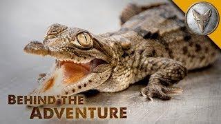 American Crocodile - Behind the Adventure