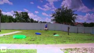Bass Pet Resort & Spa Kissimmee Fl Kennels Boarding Grooming