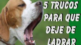 5 Trucos Para Que Tu Perro No Ladre Cuando Se Lo Ordenes Youtube