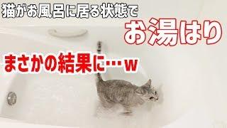 猫がお風呂に居座るのでそのままお湯はりをしてみた結果