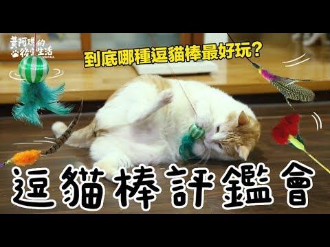 【黃阿瑪的後宮生活】哪種逗貓棒最受歡迎?逗貓棒評鑑會