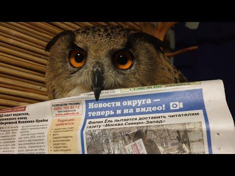 Я принесла газету с заметкой про нашу совушку