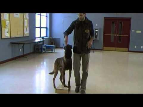 Dog Training - Competition Heeling, Episode 1
