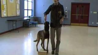 Dog Training - Competition Heeling, Episode 1