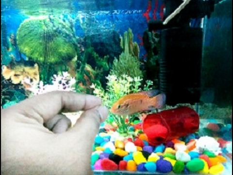 How To Feed And What To Feed  Your Fish(HINDI)