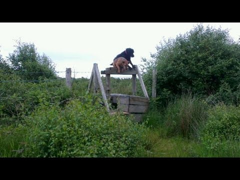 Dog does somersault