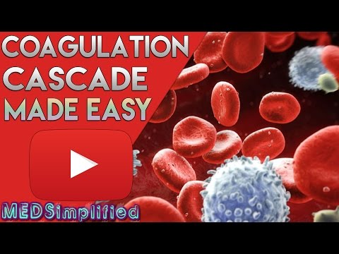 Coagulation Cascade SIMPLEST EXPLANATION !! The Extrinsic And Intrinsic Pathway Of HEMOSTASIS